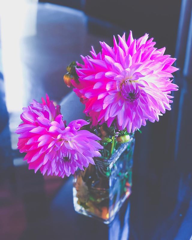 "I had to run and grab tortillas last night—our 7.5 moderately affected kid on the autism spectrum INSISTS every Tuesday be taco Tuesday and he isn't wrong bc 🌮 🌮🌮—and these dahlias caught my eye.⠀ ⠀ I thought, ""Hey. Hi. Hello. Tam, you should birthday treat yo' self!""⠀ ⠀ So I did. ⠀ ⠀ There's all this emphasis in our culture on finding a white knight who buys you flowers.⠀ ⠀ And if that fulfills you, then you live that life.⠀ ⠀ As for me, I love myself enough to buy me my own ""I adore you, birthday girl"" flowers. 🌸💐🌺⠀ ⠀ My husband does, too.⠀ ⠀ If a relationship is what you want in life, get you a relationship that can do both. 😘⠀ •⠀ •⠀ •⠀ •⠀ •⠀ #flowers #dahlia #FreedomAfterTrauma #loveyourself #selflove #authenticity #wcw #happybirthday #selfcare #loveyourself #selfesteem #traumasurvivor #instabday #instabirthday #birthdaygirl #t1fl #aliveandfree #lifepositive #wednesdaythoughts #feminist #fiercewomen #feminist #feminism #progressive #modernmarriage #marriage #modernrelationships #happymarriage #healthymarriage #happy"