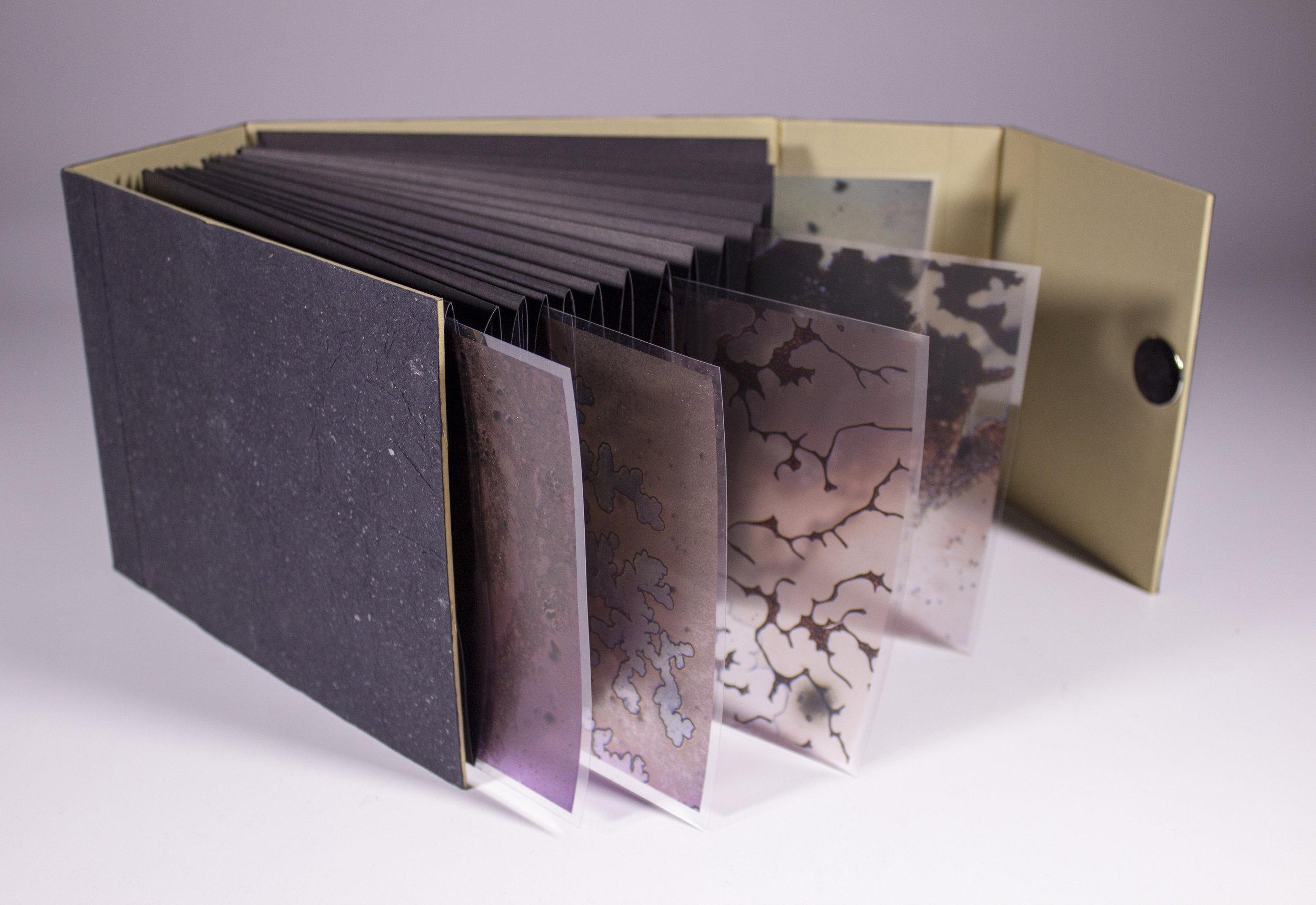 Internal Landscapes 5.jpg