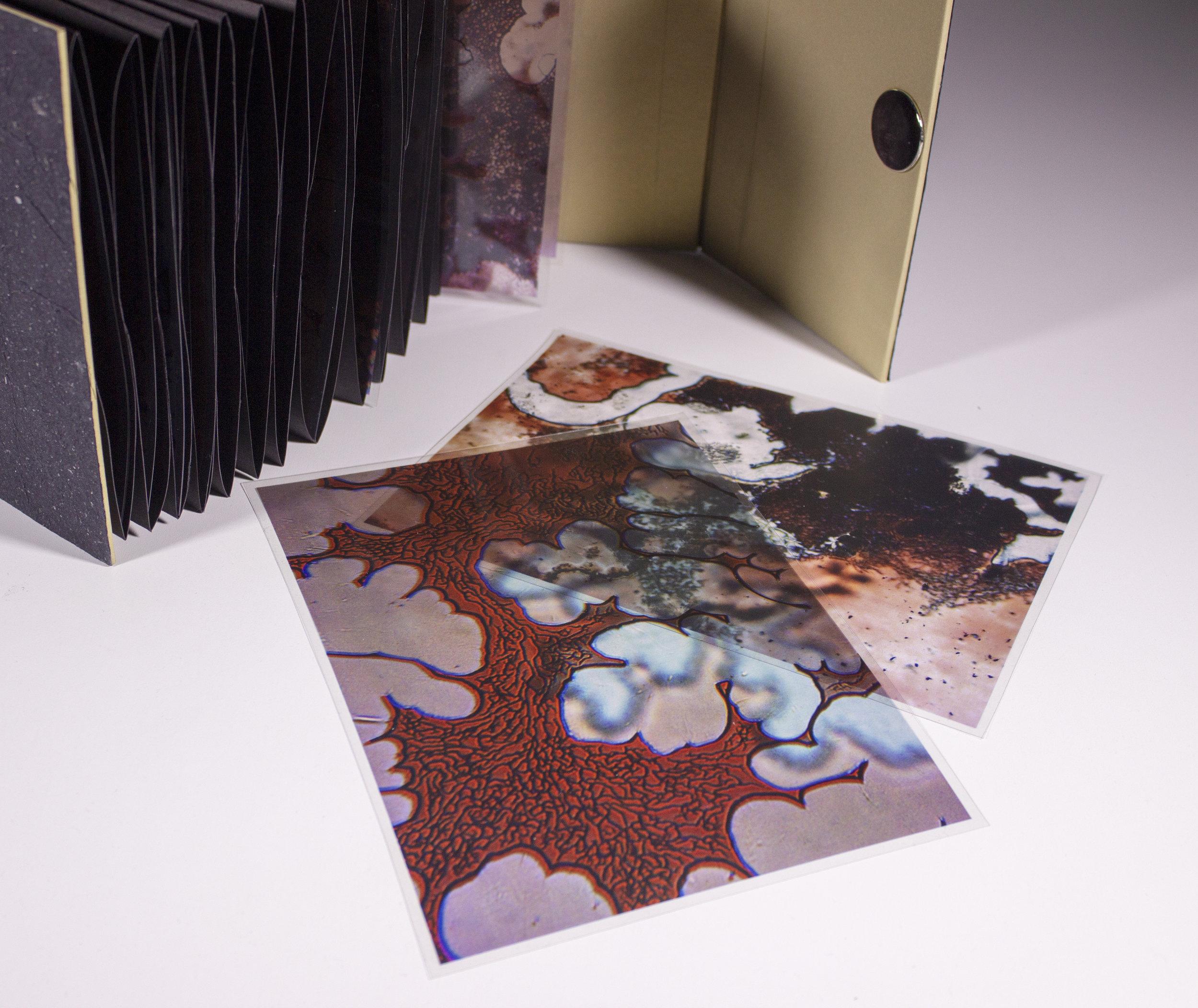 Internal Landscapes 7.jpg