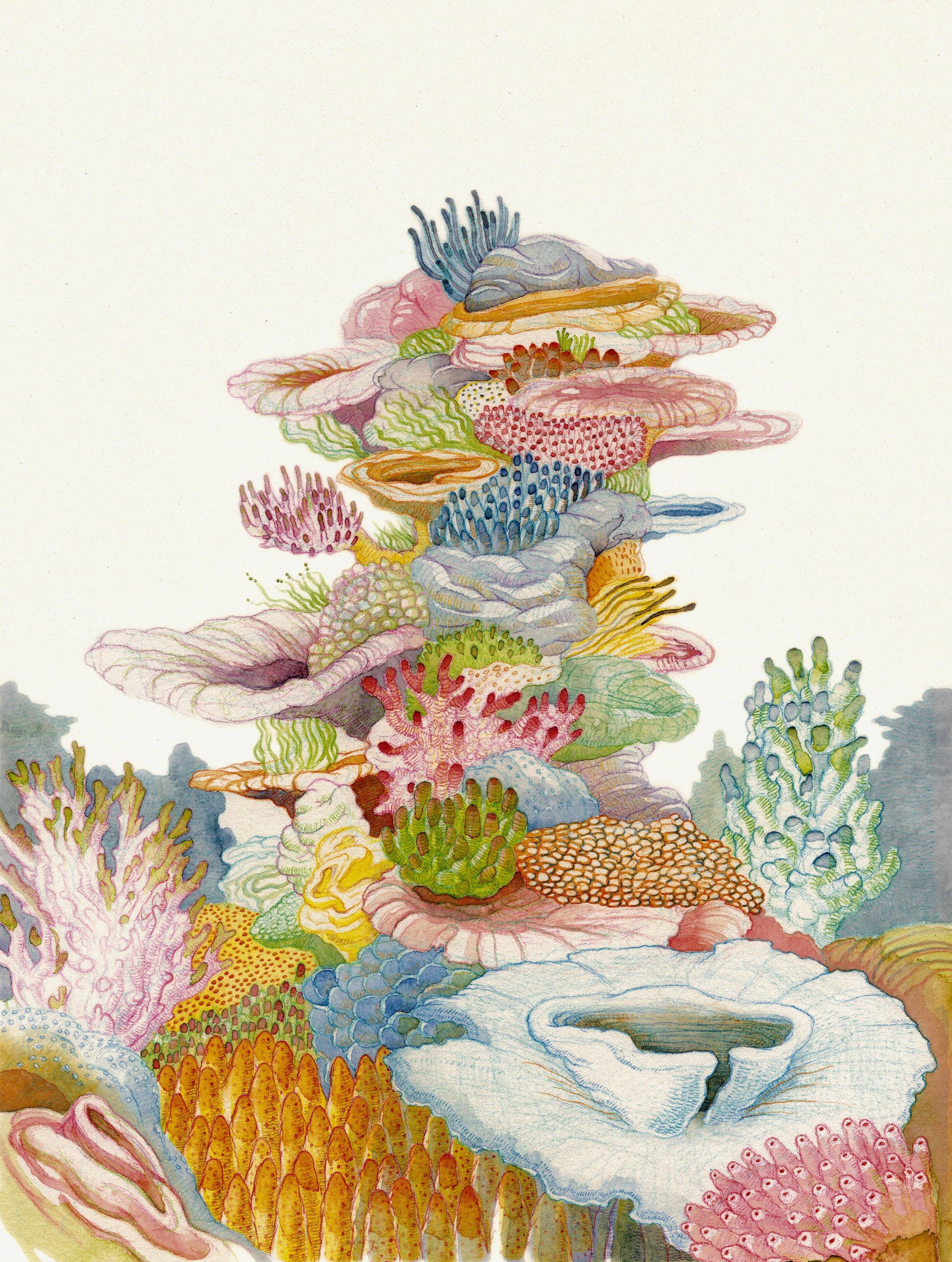 Illustration for Australian Sea Life / Little Hare Books / due for publication October 2019