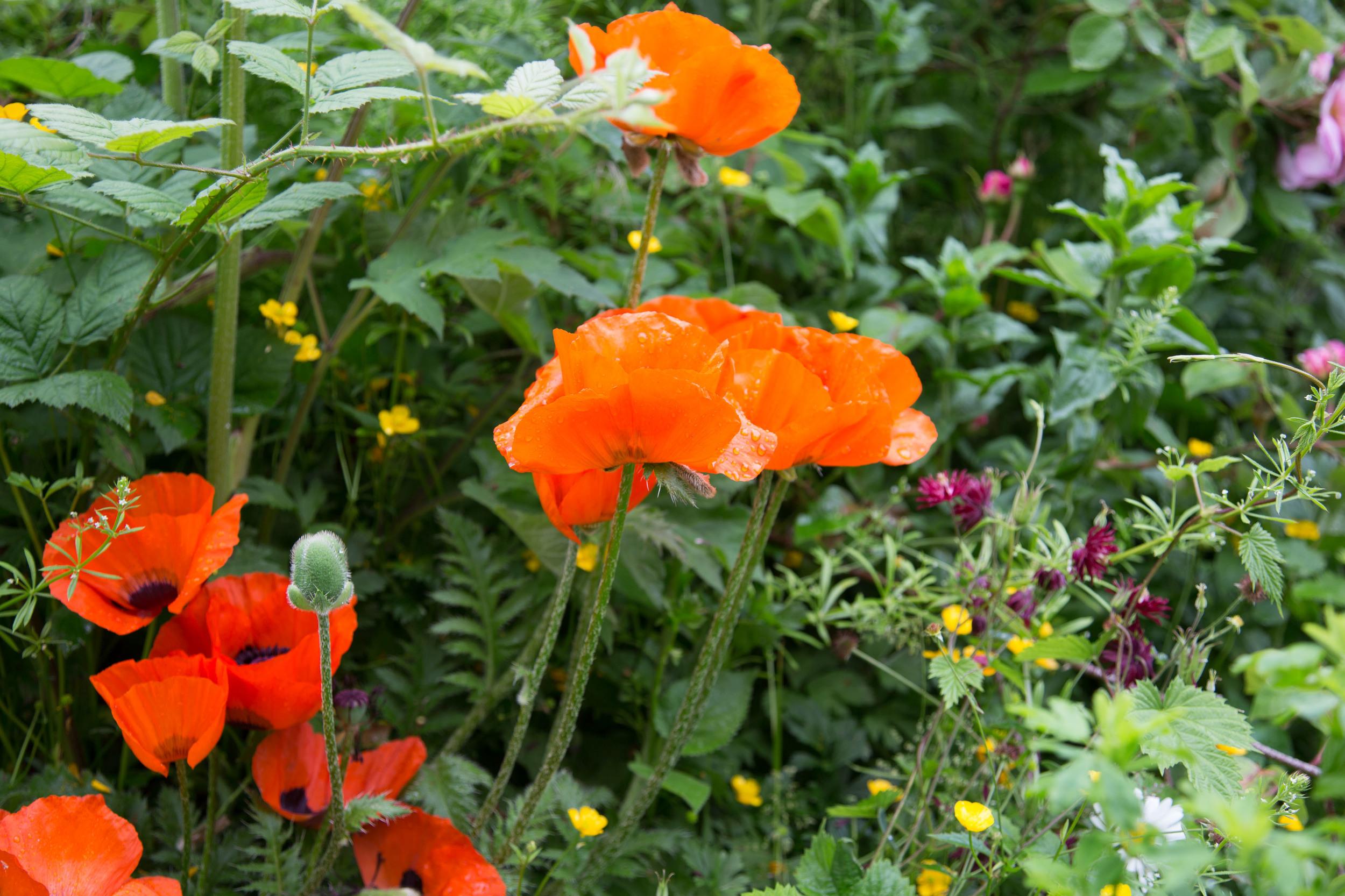 Iden croft garden Juni 2013