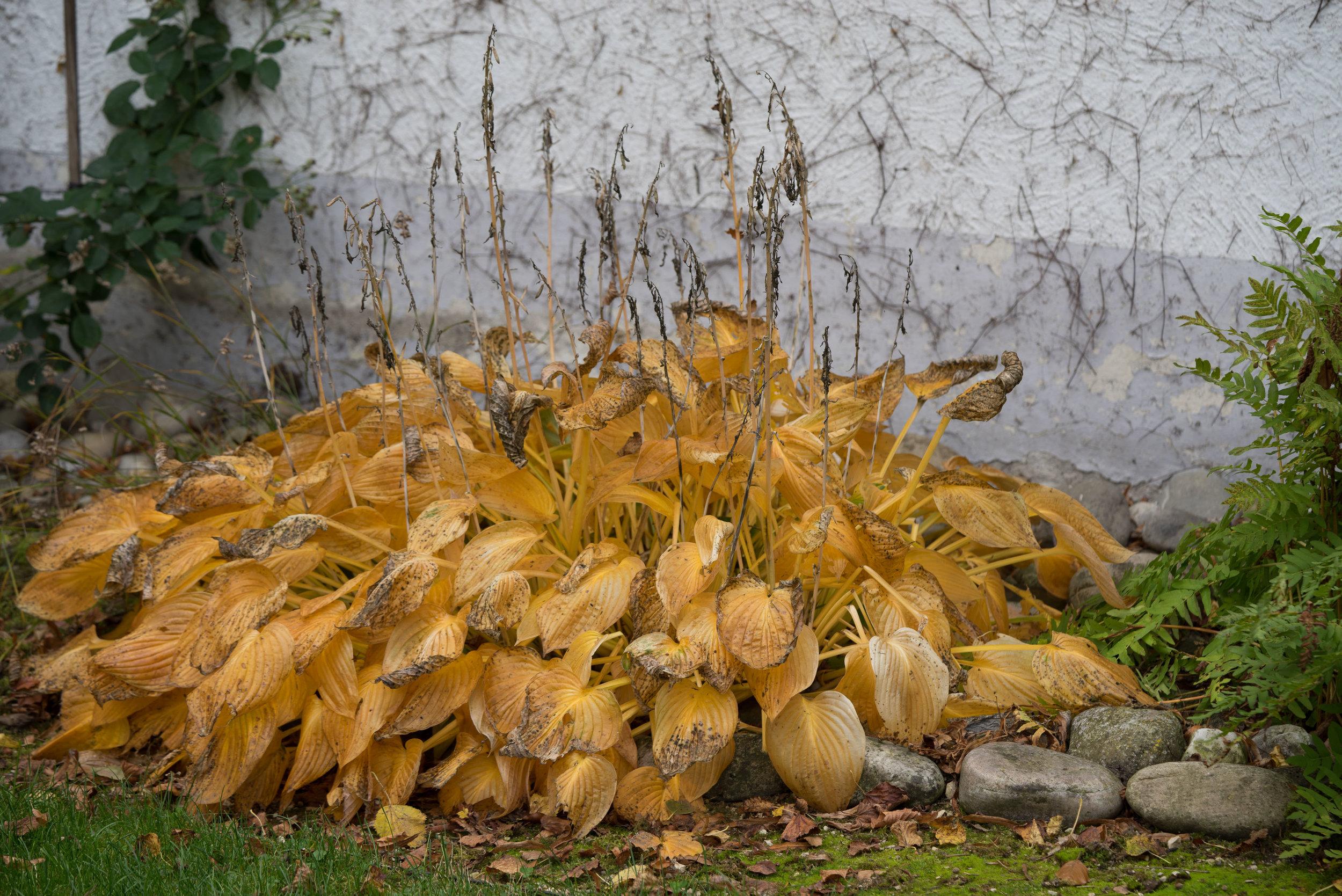 Oktobergarten (3001 von 3).jpg