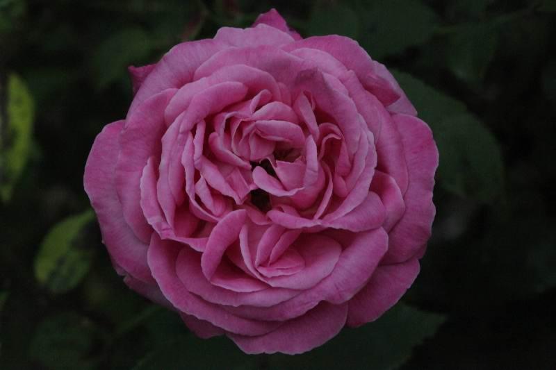 'Hermosa'