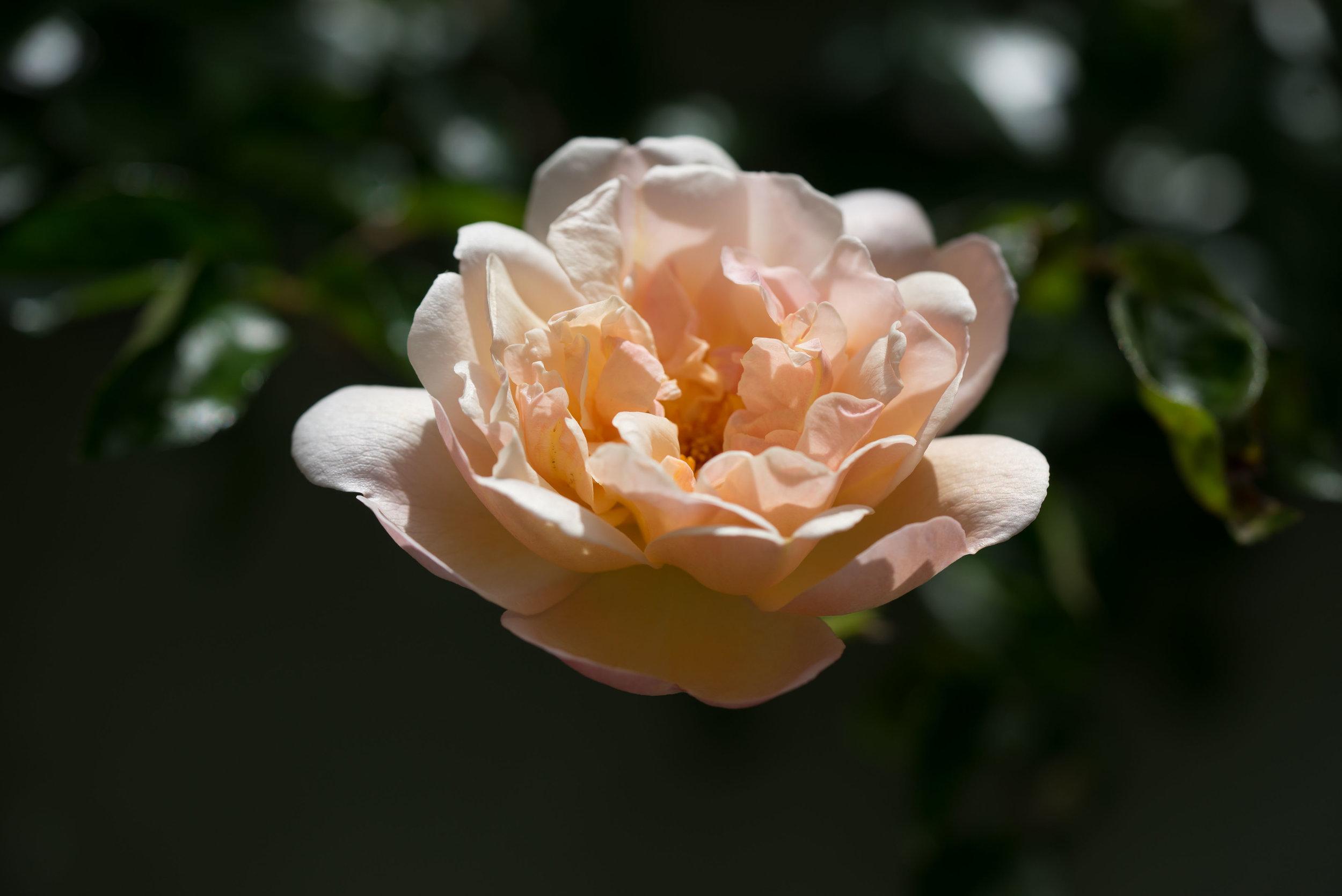 'Léontine Gervais'