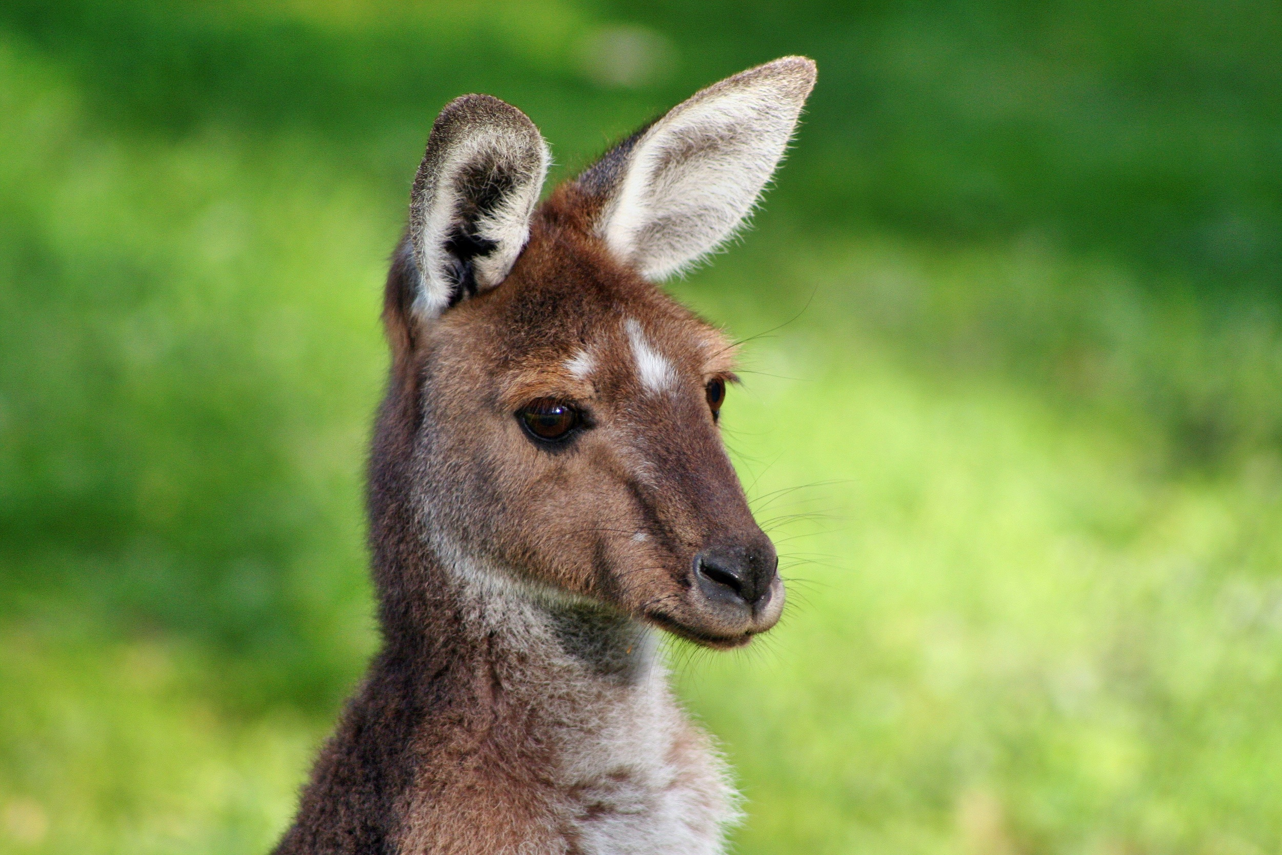 A wallaby in your backyard when you live in Australia?