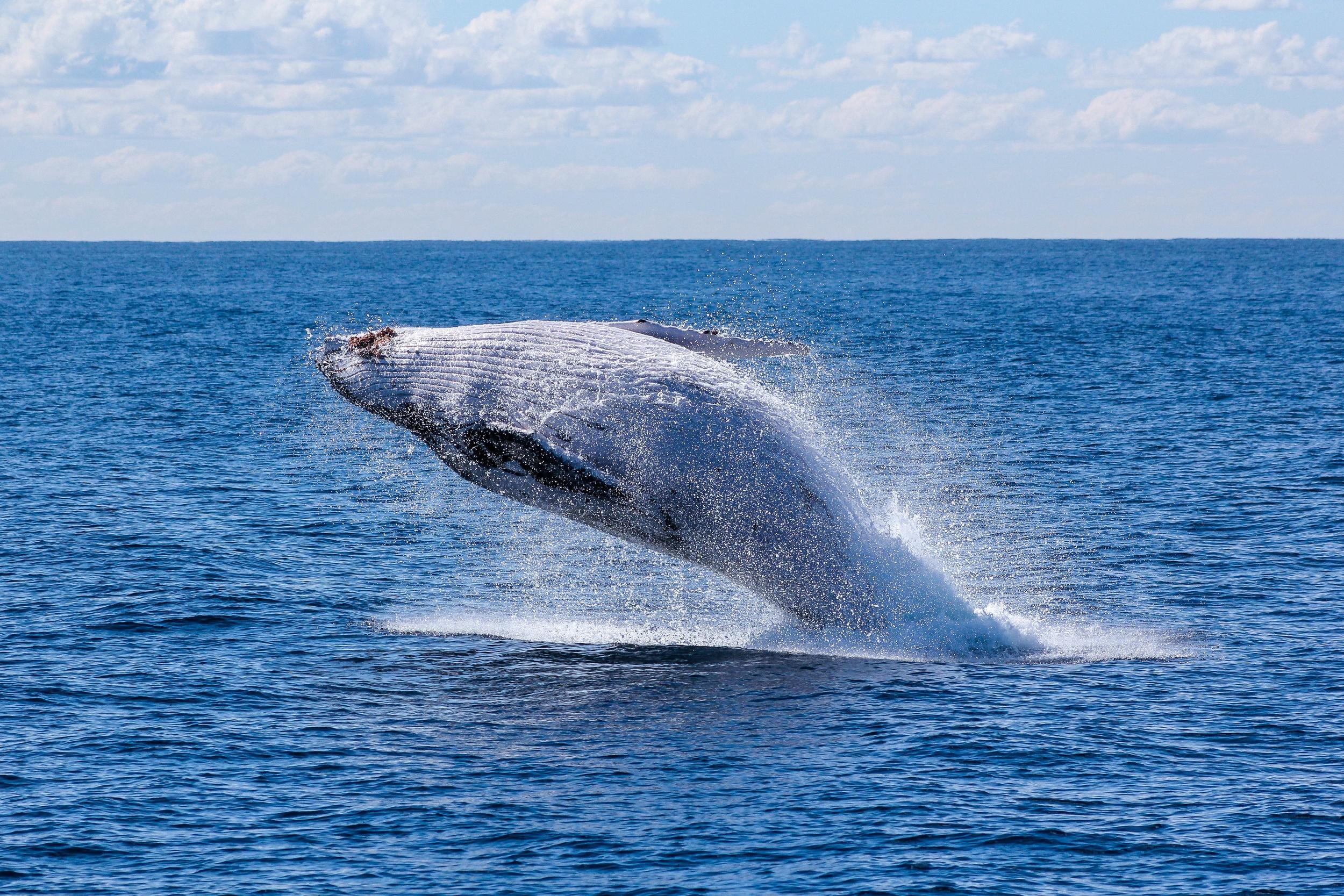Whale season in Australia