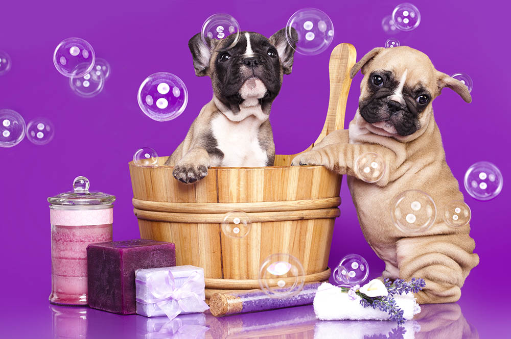 PUPPY GROOM - Introduce Your Fur Baby To GroomingBOOK
