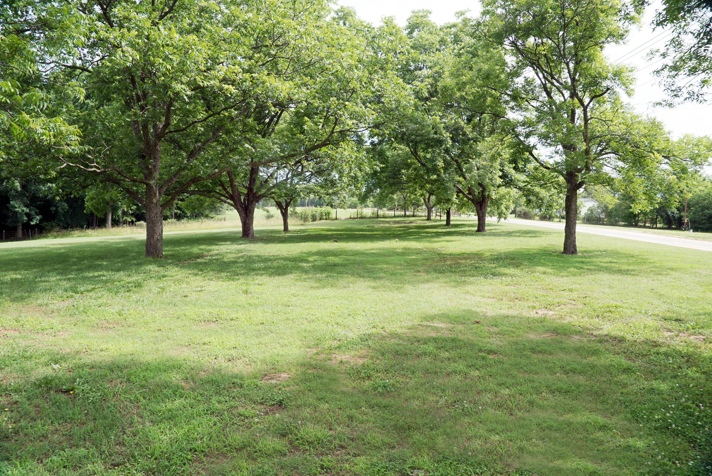 Pecan grove, great for wedding receptions