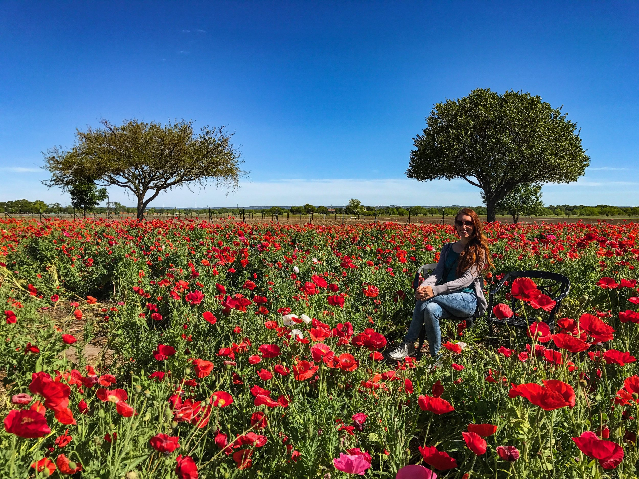 Largest working wildflower farm in the US in Fredericksburg, Texas