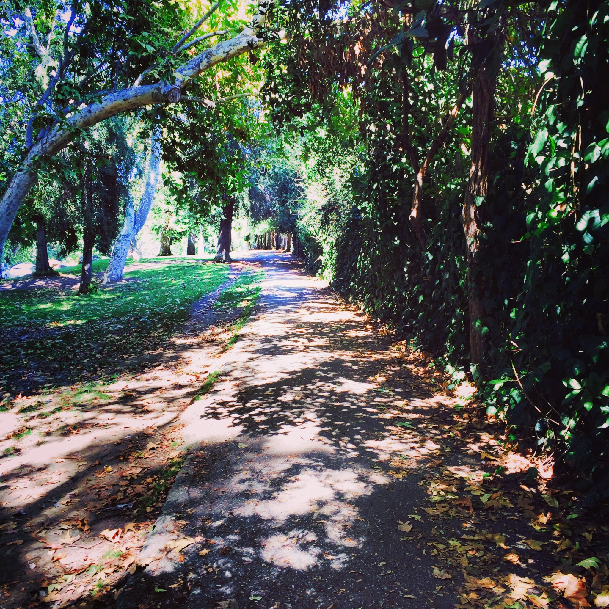 Griffith Park Hiking Trail