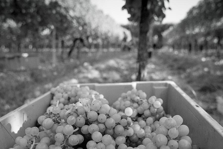 The-Harvest-Report_900x.jpg