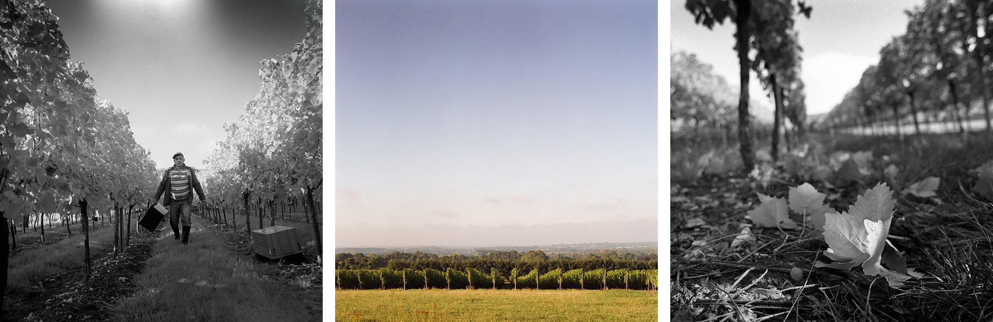 Westwell-Wines-Estate-Header.jpg