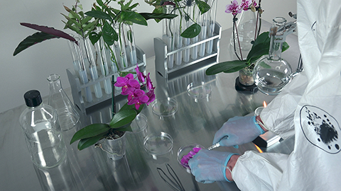 Anicka Yi, still from  The Flavor Genome, 2016 . 3D high-definition video, color, sound; 22 min. Collection of the artist; courtesy the artist and 47 Canal, New York.
