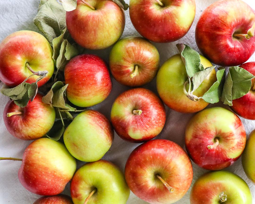 apple picking season 2.jpg