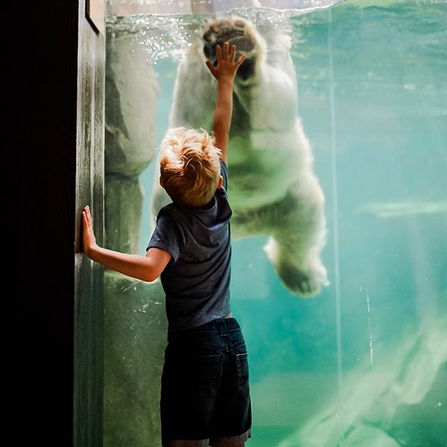 Have you even lived if you've never high-fived a polar bear?! ✋🏼❄️ • • I love taking photos, but have been dragging my feet when it comes to learning/improving my editing. So, in order to encourage myself, I'm looking back at some of my favorites! Like, this one from last summer. ☀️ • • 💙 Welcome to our Boy Mom Loop • • There's something extra special about a bond between a mother and son. I have teamed up with an amazing group of Mamas celebtating the joys of having boys! • • Follow along the #boymom_loop  Next up is @michellelouphoto