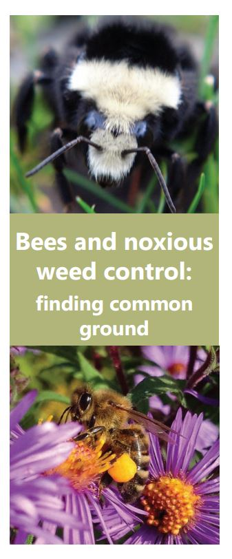 "This new brochure is about supporting bees and other pollinators when controlling noxious weeds. Two page brochure, 8 1/2"" x 11""."