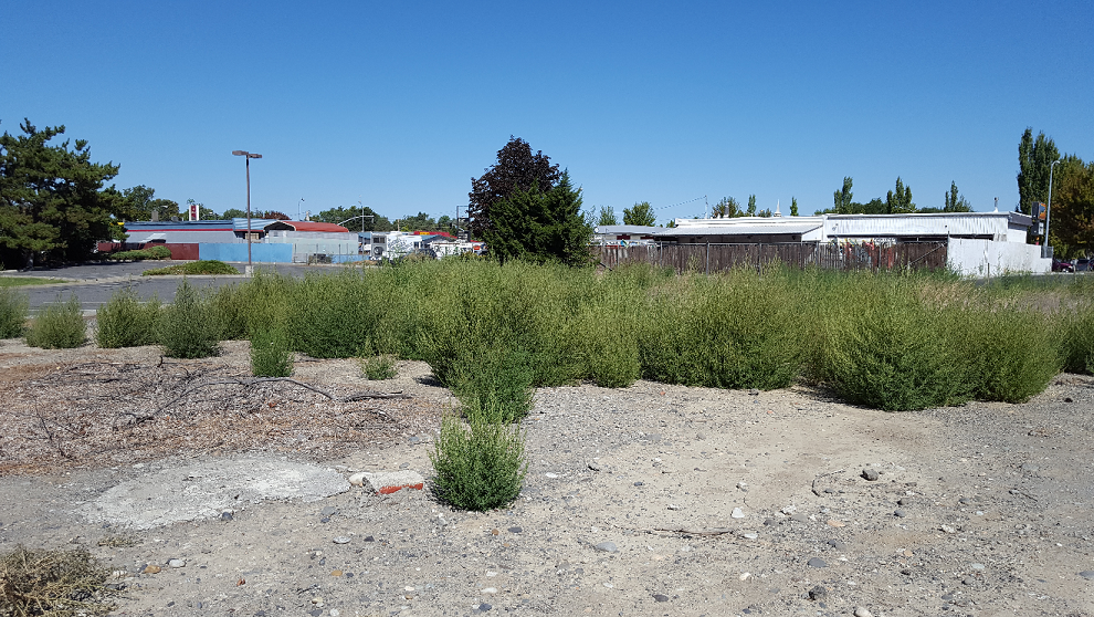 It is important to remove the tumbleweeds from fence lines to prevent further soil infestation.