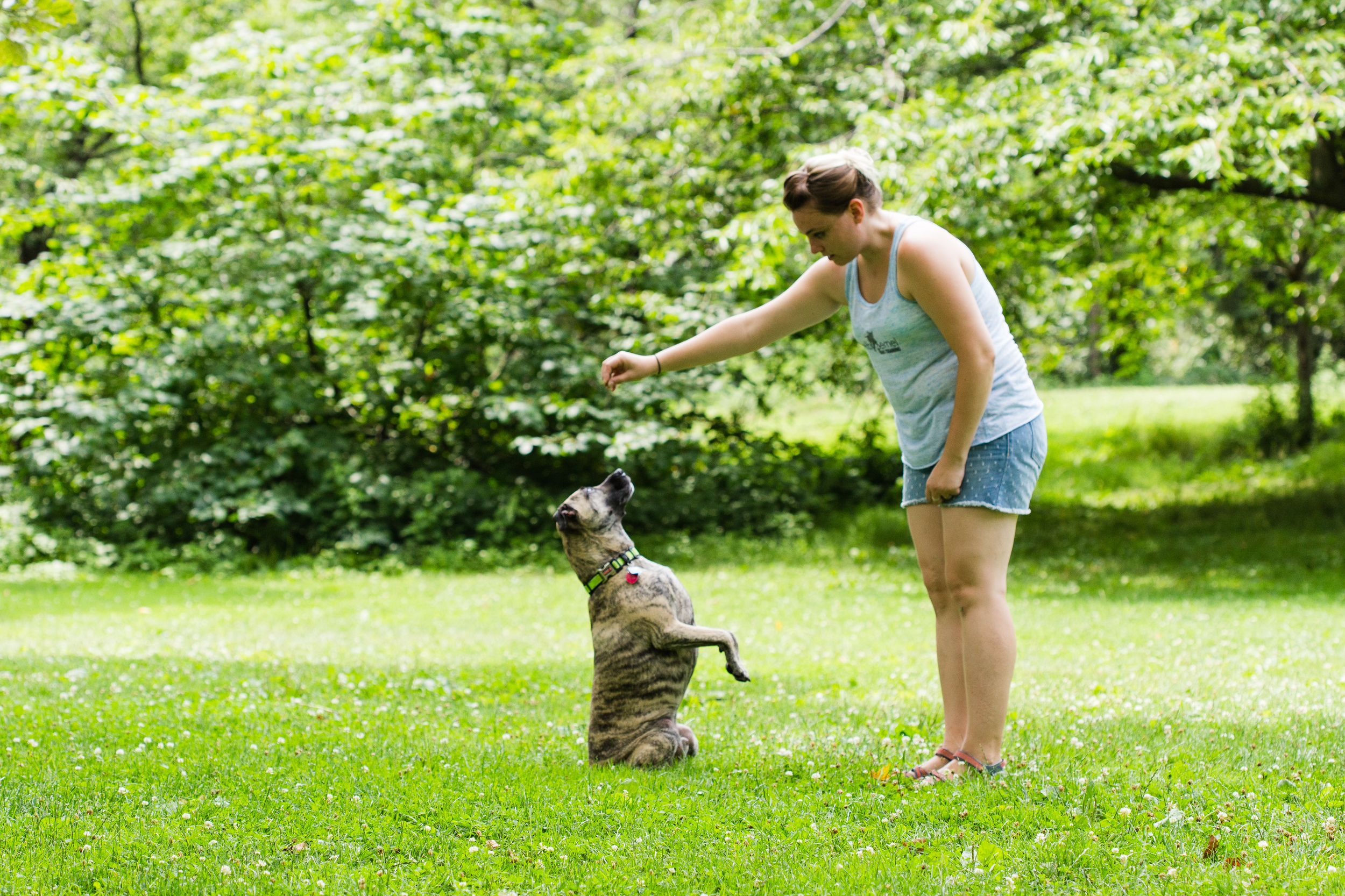 Shelby Semel New York City Dog Training :: Dog Behavior Training
