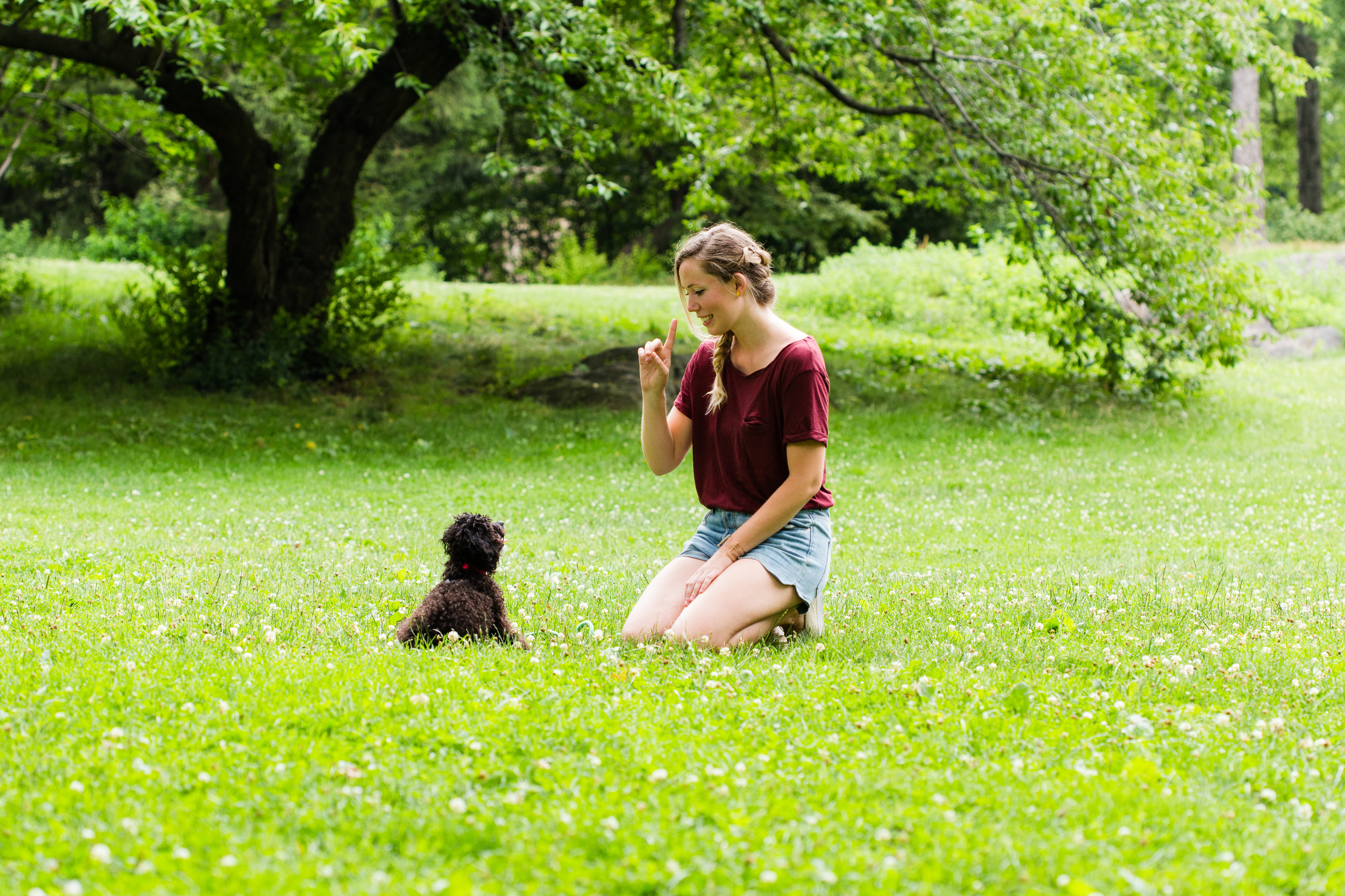 Shelby Semel New York City Dog Training :: Private Dog Training Classes