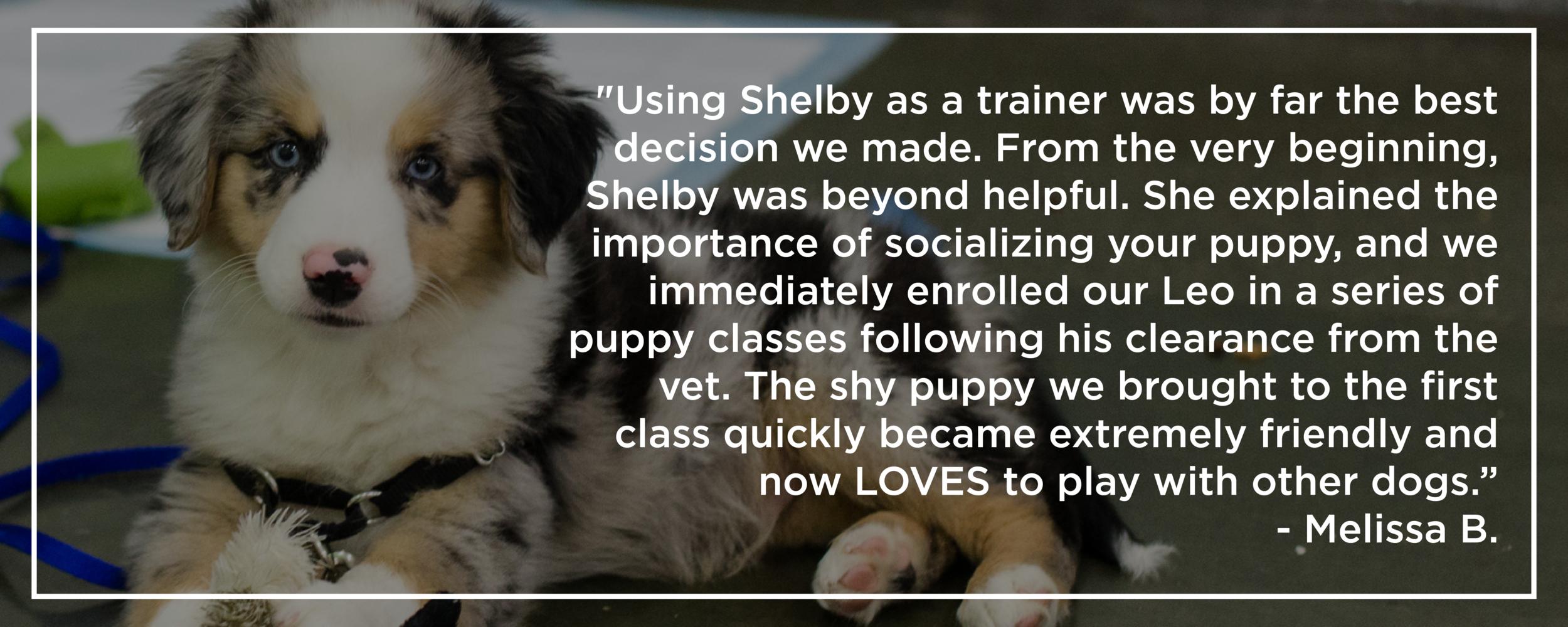 Shelby Semel New York City Dog Training :: Group Dog Training Classes