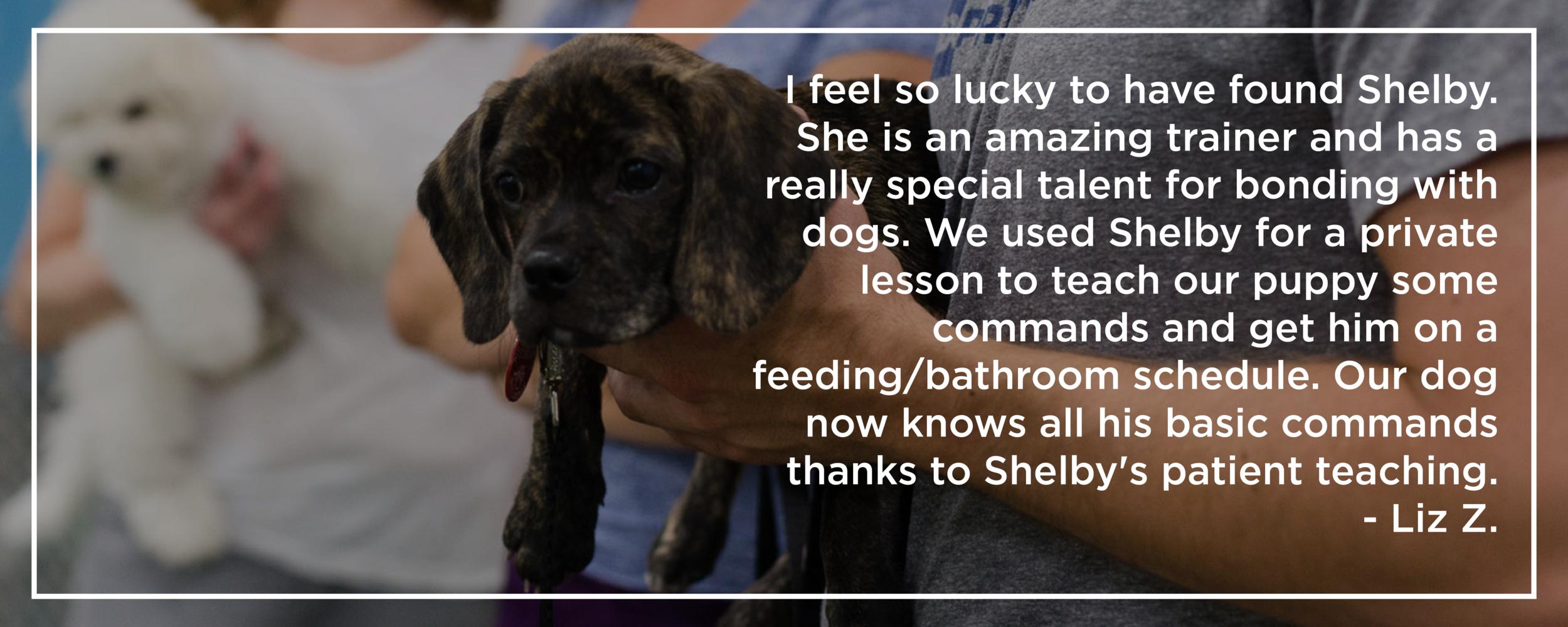 Shelby Semel New York City Dog Training :: Group Dog Obedience Classes