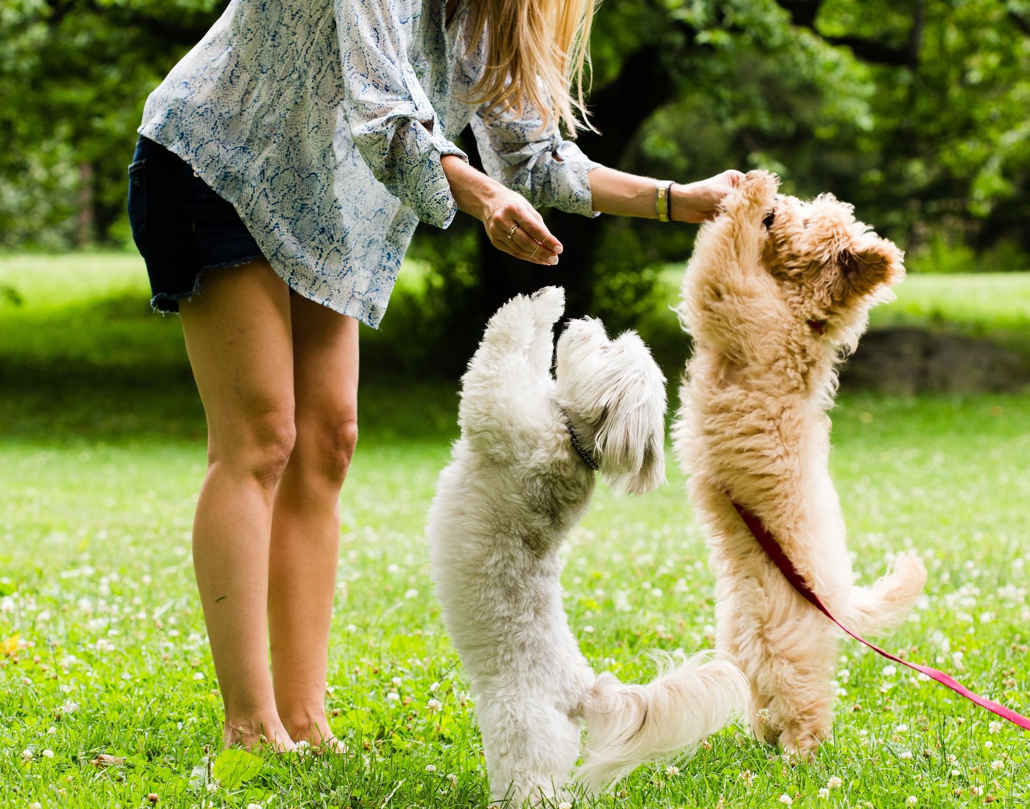 Shelby Semel New York City Dog Training :: Dog Obedience Training