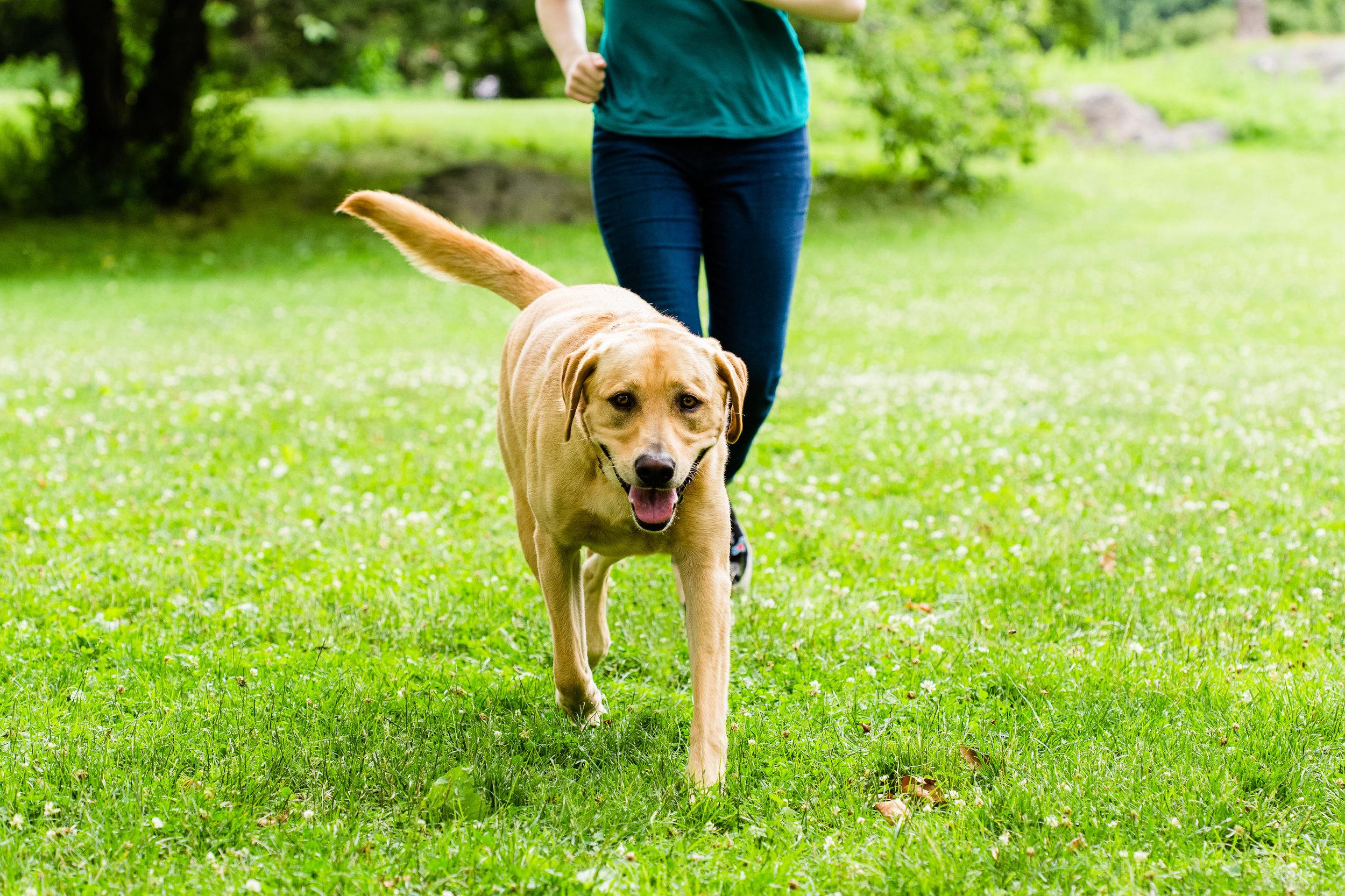 Shelby Semel NYC Positive Reinforcement Dog Training
