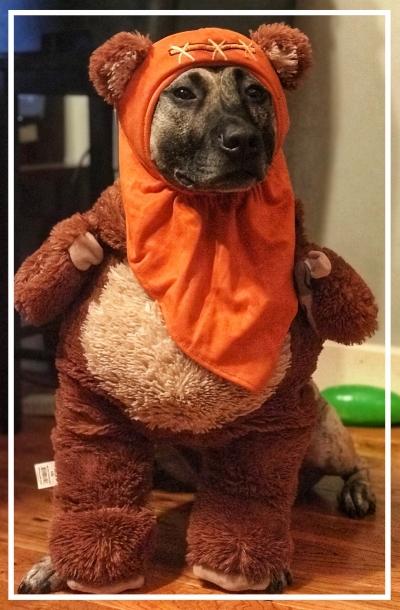 dog halloween costume.JPG