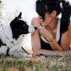 positive dog training manhattan Beach