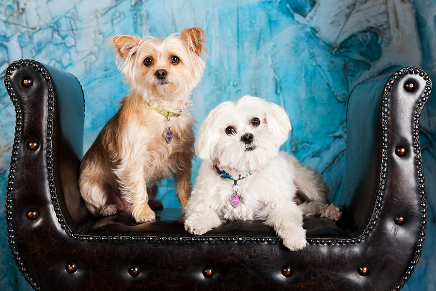 Pet Photography CWLIFE 006.jpg