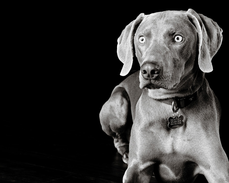 Pet Photography CWLIFE 017.jpg