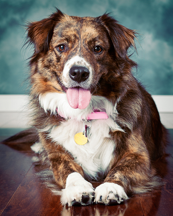 Pet Photography CWLIFE 021.jpg