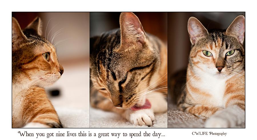 Environmental Pet Portrait CWLIFE005.jpg