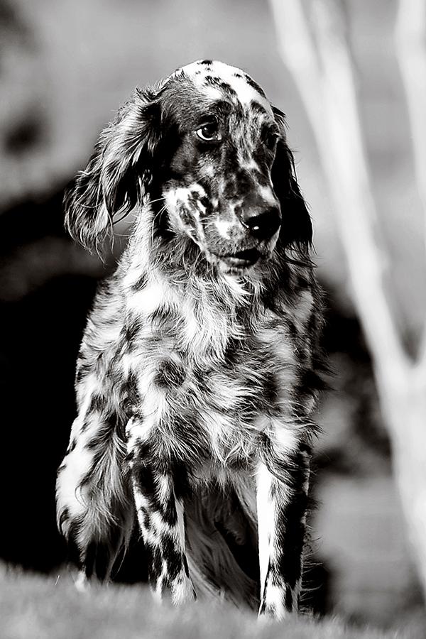 Environmental Pet Portrait CWLIFE006.jpg