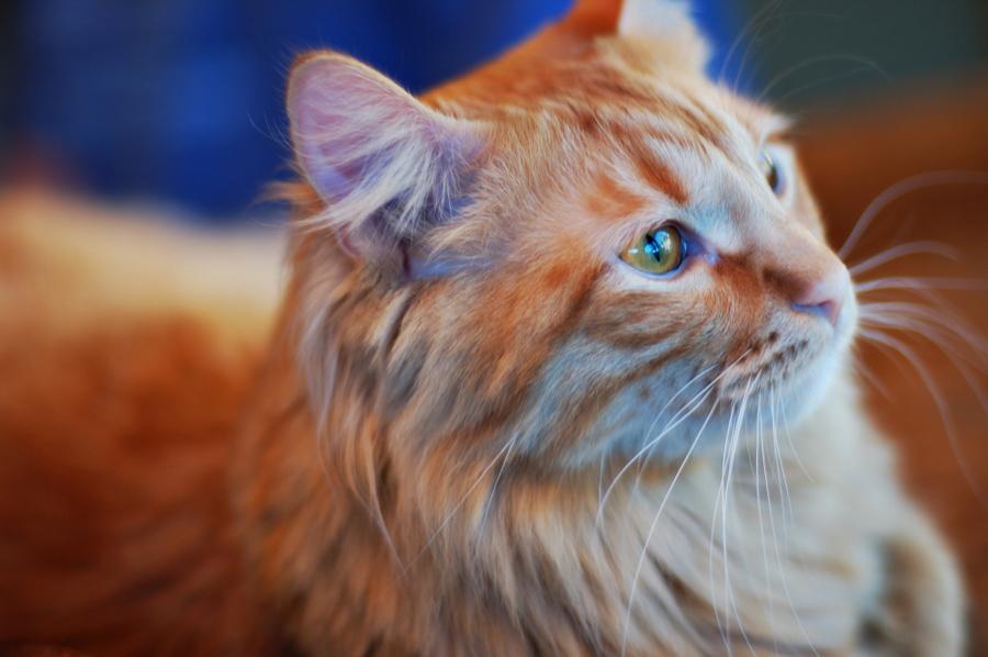 Environmental Pet Portrait CWLIFE008.jpg