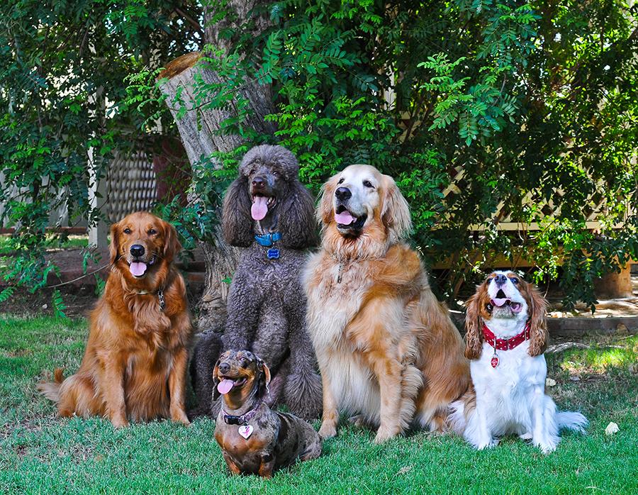 Environmental Pet Portrait CWLIFE012.jpg