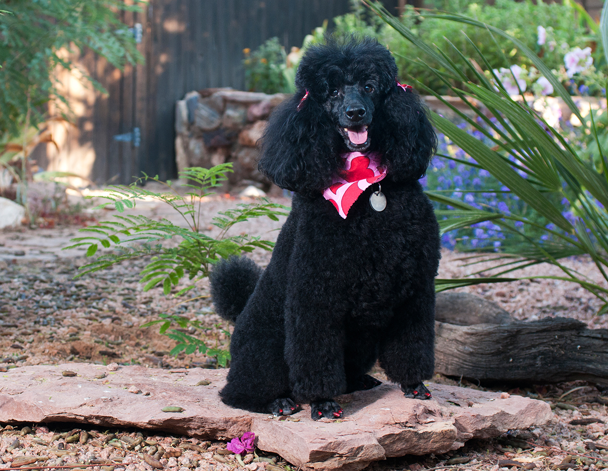Environmental Pet Portrait CWLIFE023.jpg
