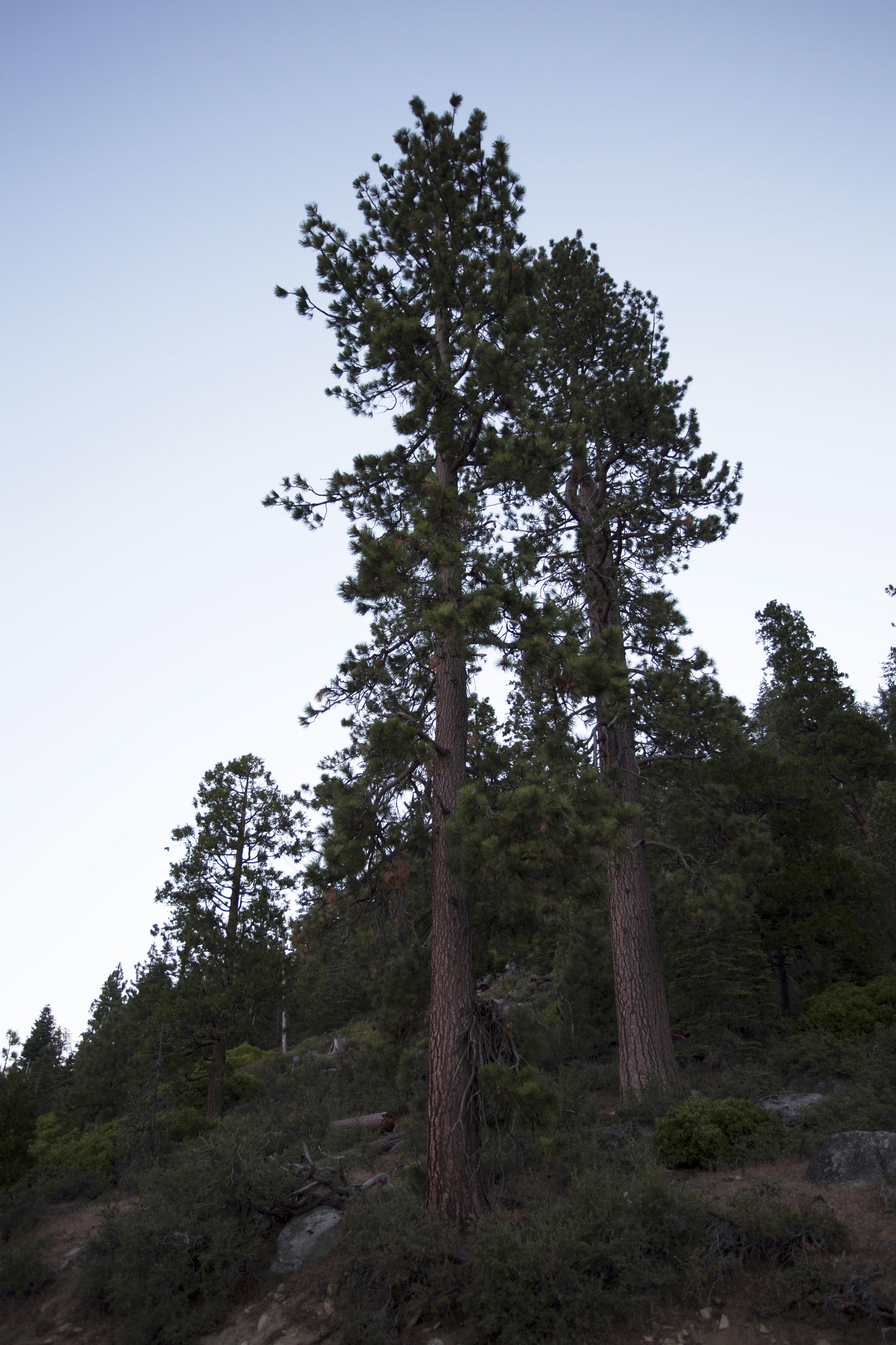 tahoe7.jpg