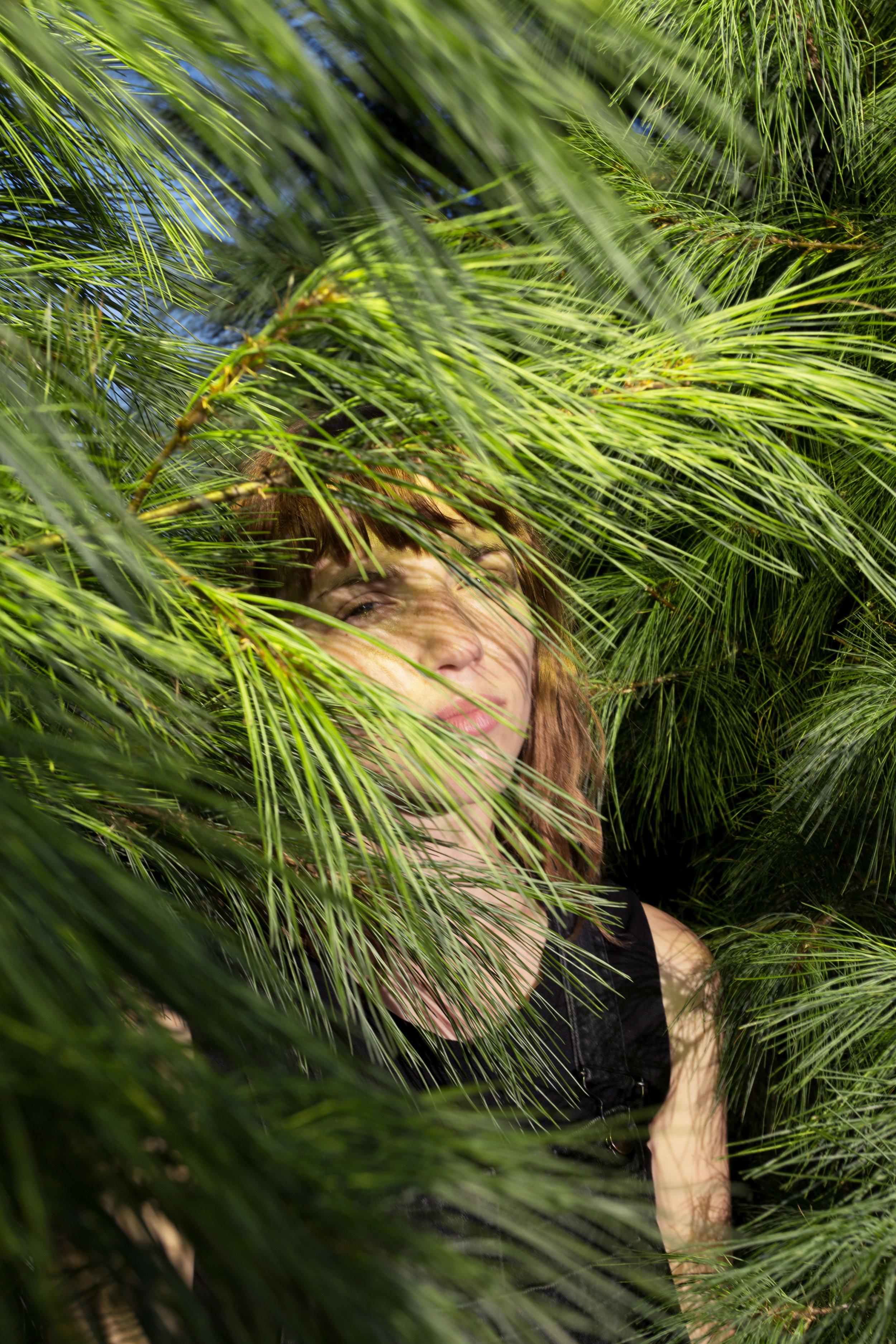 pine10.jpg