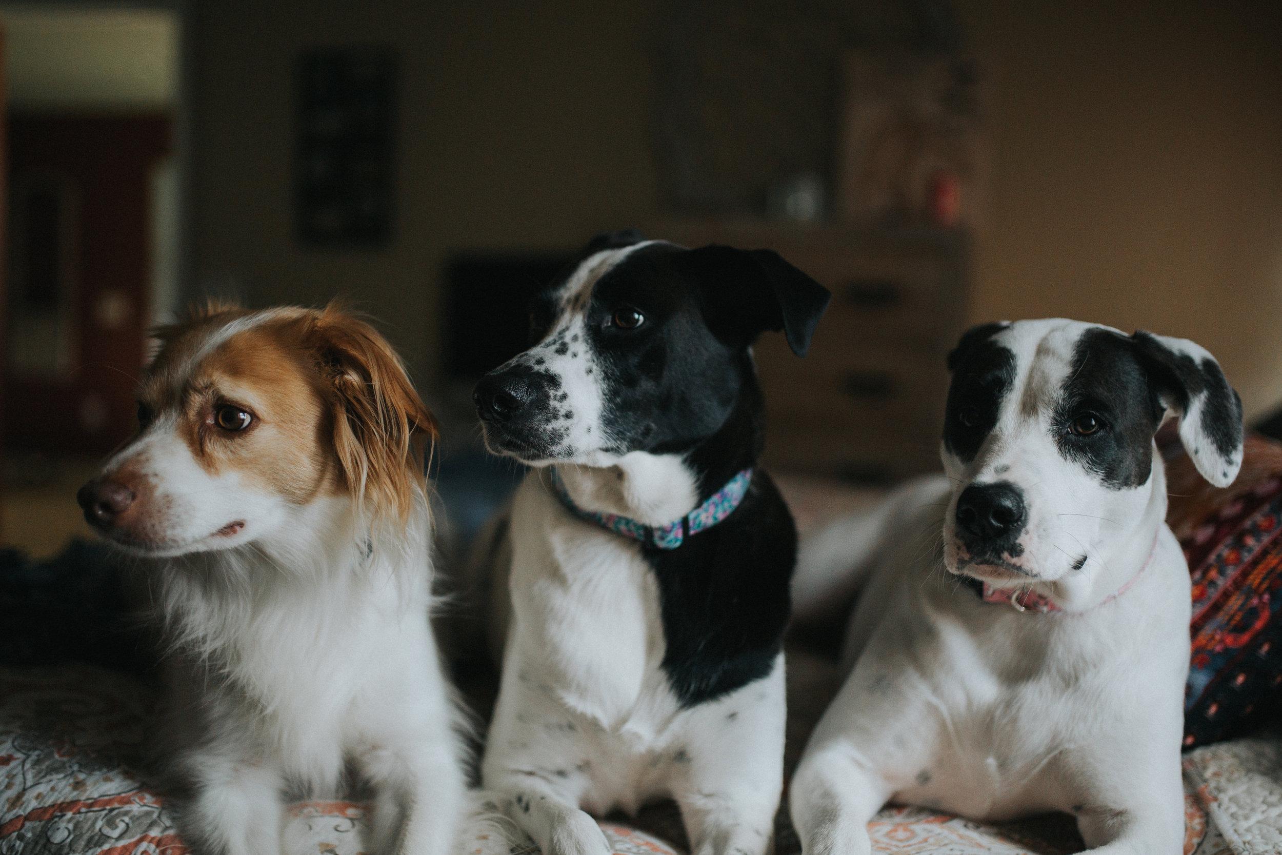 Abel, Piper, Gypsy