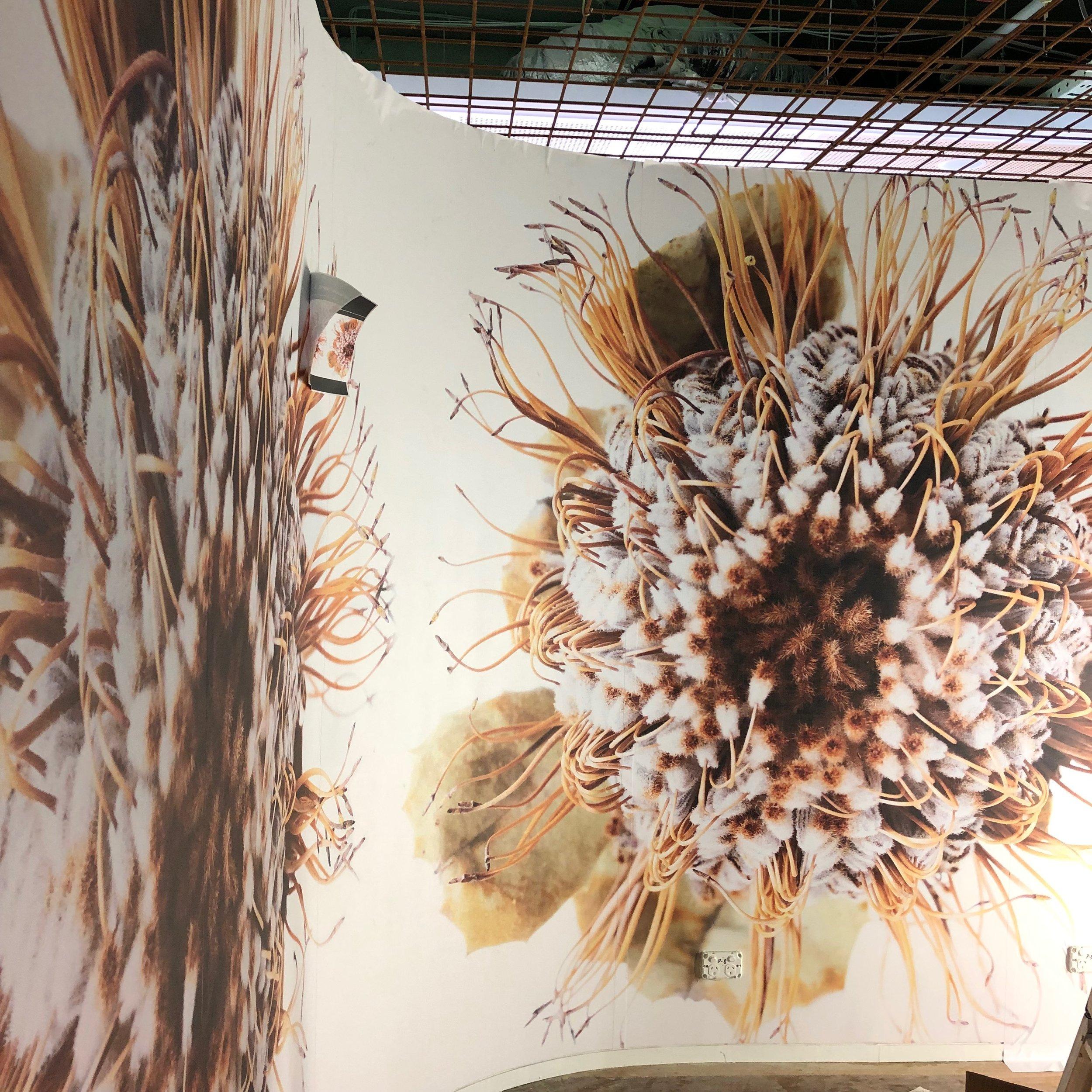 floral wallpaper banksia