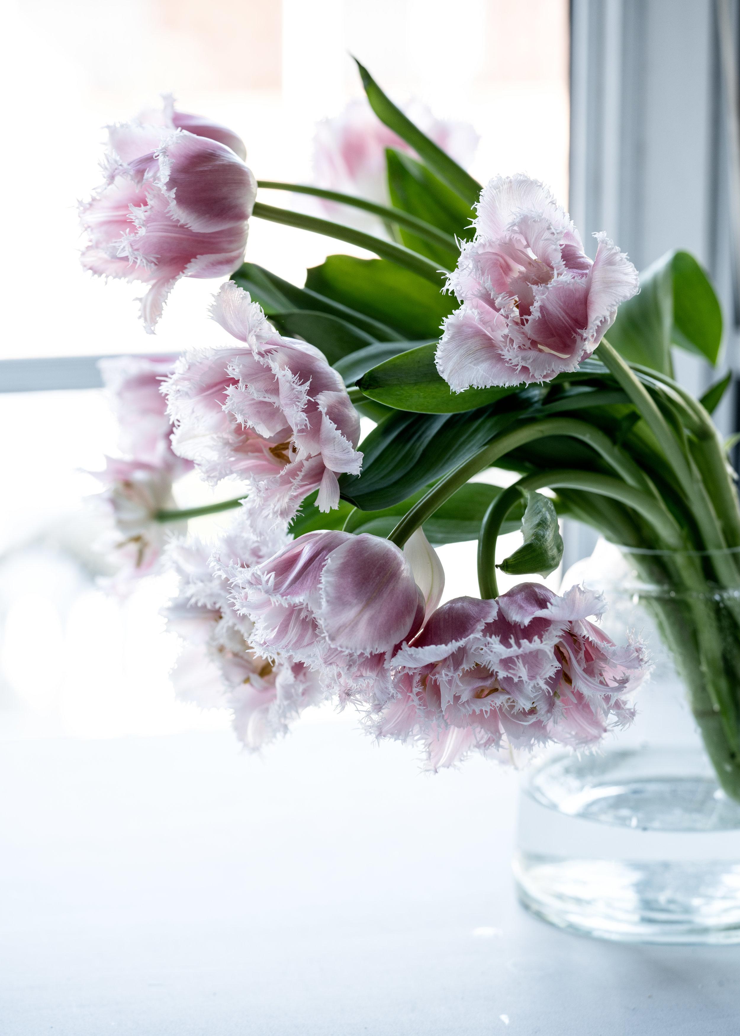 Fringed tulip in vase