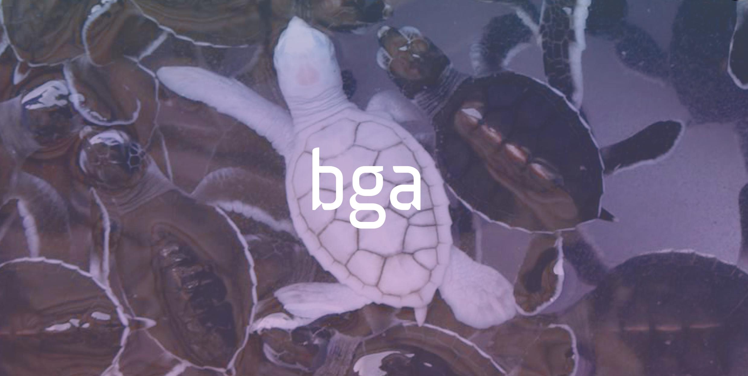 BGA Bundesagentur Branding