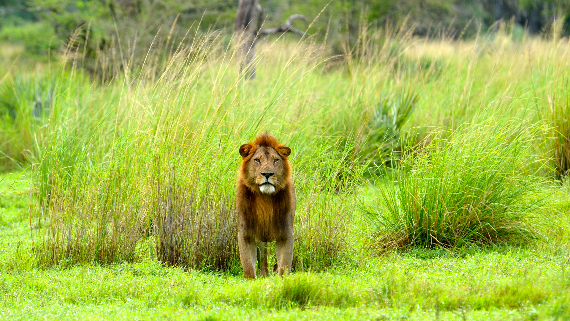 Gorongoza Game Park