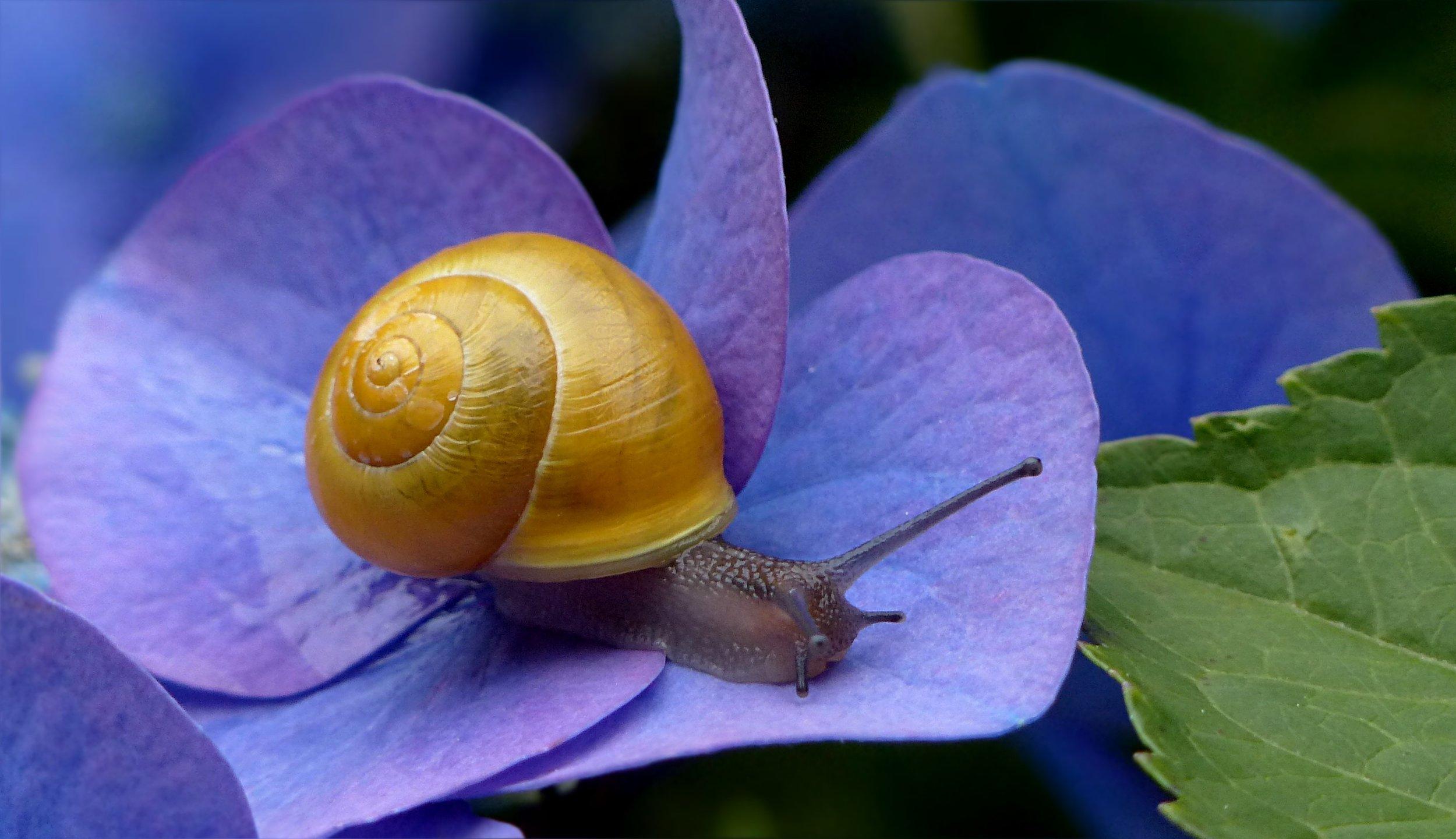 Snail Extract Soap