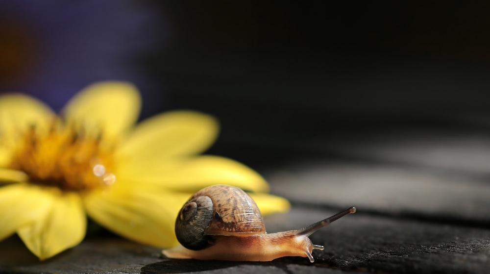 Snail & Yellow Leaf.s.jpg