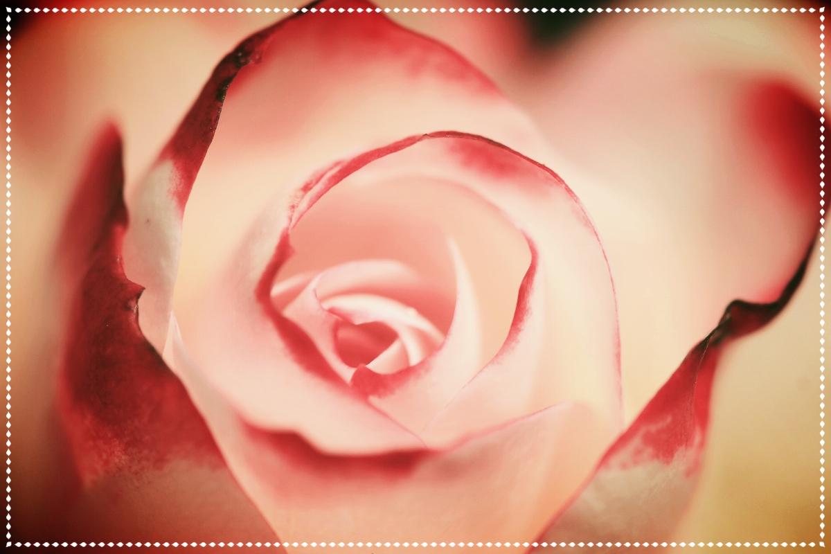 Rose French Soap.jpg
