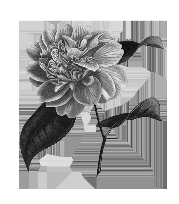 Rose3-1.png