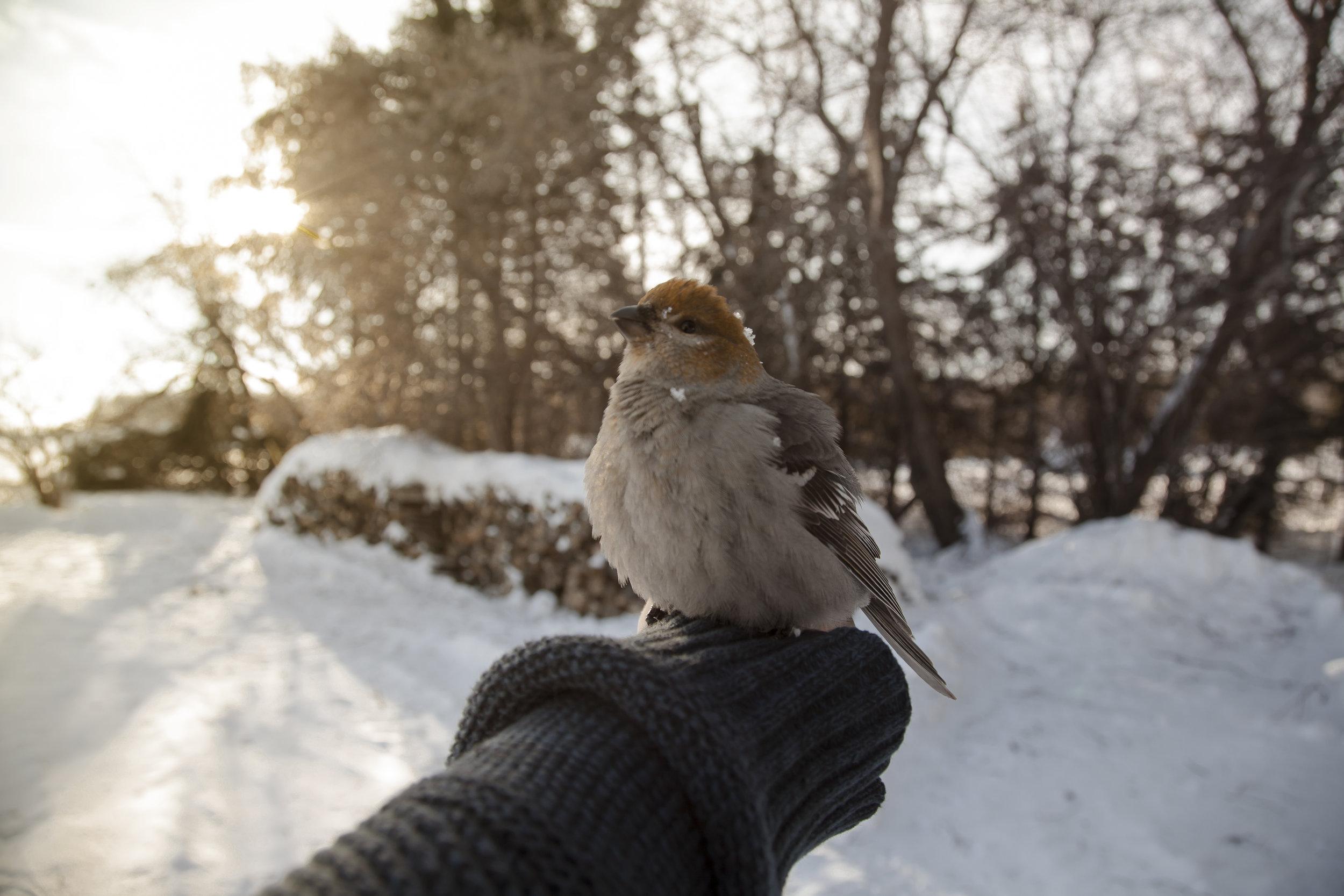 birdinthehand.jpg
