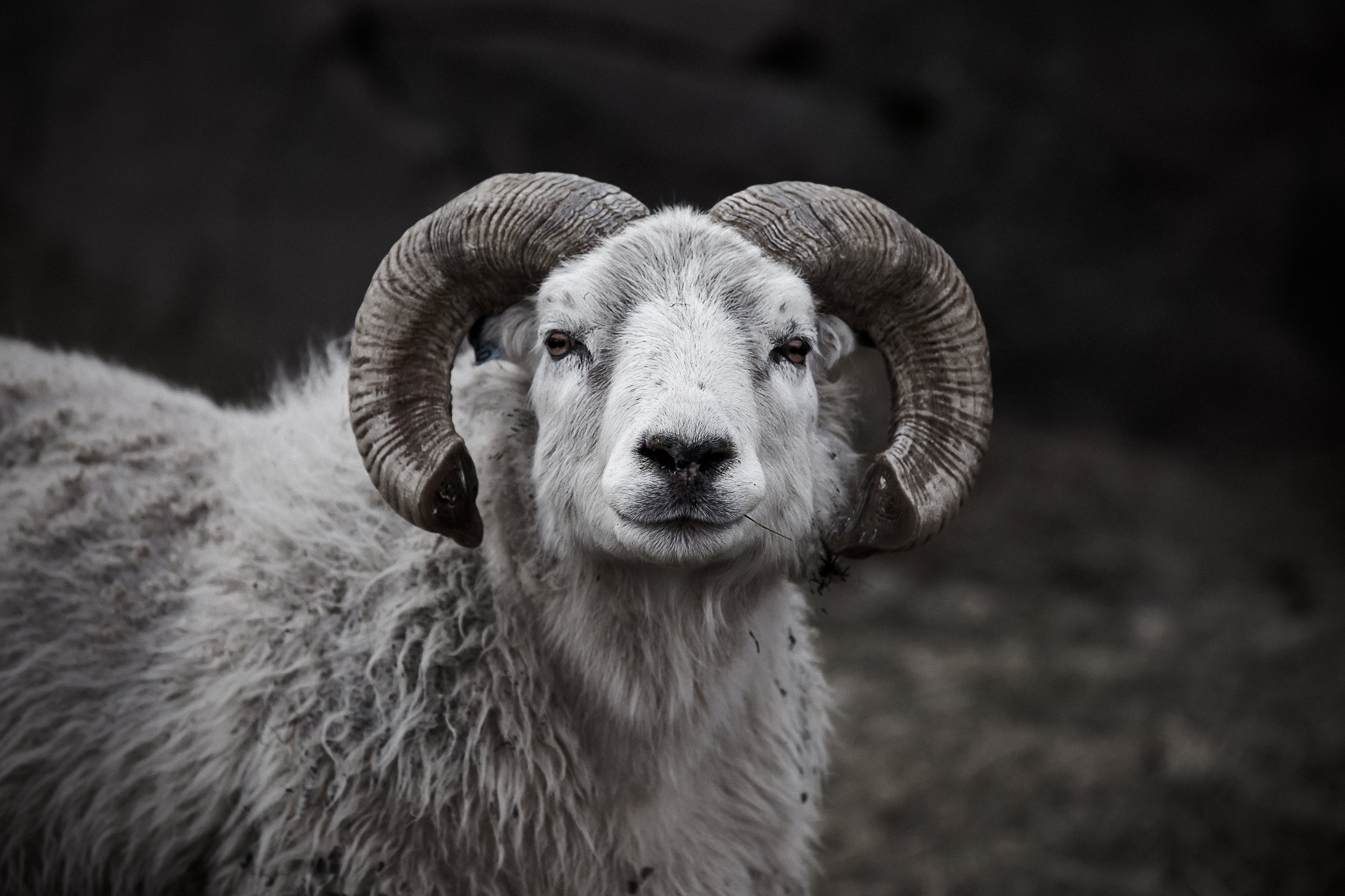Ram Edit